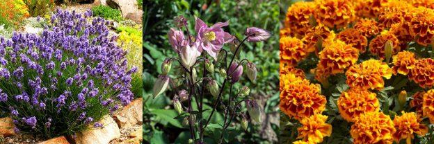 Zaštićeno: Biljke 7.c u školskom Vrtu zdravlja i ljepote